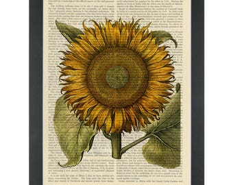 Sunflower vintage botanical drawing Dictionary Art Print
