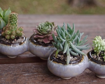 Ceramic Succulent Planter