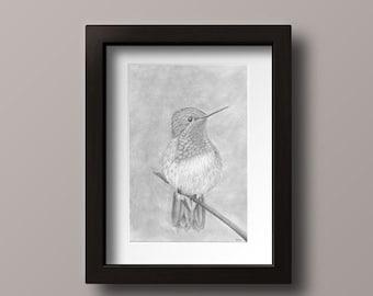 Hummingbird Print - Hummingbird Art - Hummingbird Decor - Hummingbird Wall Art - Hummingbird Drawing Print - Hummingbird Perched - Bird Art