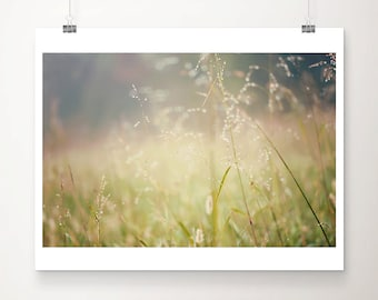 nature photography grass photograph ethereal print fog photograph rustic decor countryside print morning dew photograph grass print