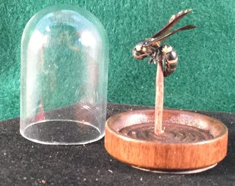 Misc.-wasp  Preserved  Wasp Glass Dome Display Wasp-entomology insect bug bee