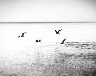 birds photography birds flying ocean photography beach nautical decor 8x10 11x14 fine art photography black white waves wall art birds gulls