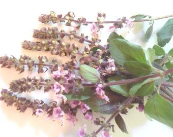 FRESH FLOWERING BASIL Blossoms, Blue lavender Flower fragrant Branches  Edible Decorative 25 stems