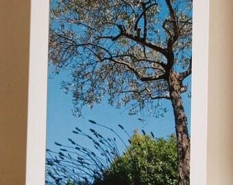 Greetings card: Mr Blue sky