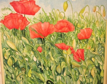 Red poppy, poppy Flanders poppy fields