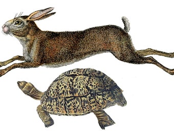 "Tortoise and Hare Temporary Tattoo - ""Slow & Steady"""
