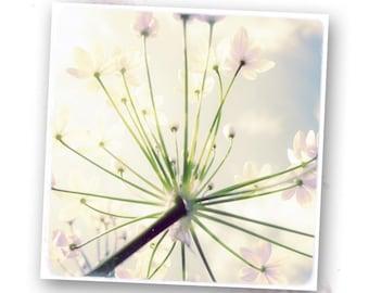 Delicate flowers 03 - photo art 20 x 20 cm - nature photos