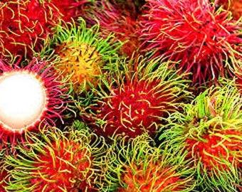 Fresh Organic Exotic Rambutan Tropical Fruit Seeds, Nephelium lappaceum, Very Tasty! Easy to Grow!