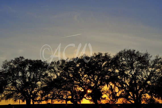 Sunset through the Oaks, Charleston, South Carolina (canvas)