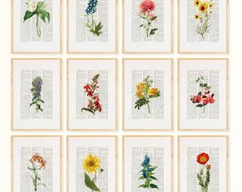 FLOWERS Dictionary Art Print Set Botanical Pressed Flower
