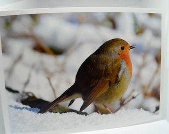 Cute Robin In The Snow Blank Greetings Card 210 x 148.5mm