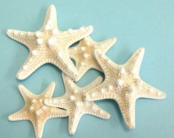 """Starfish -  1 Knobby Starfish 4""""-5"""" - Beach Decor Star Fish Wedding Beach Parties Craft Shells Bulk Shells"""
