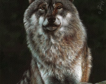 The Wolf | Original Painting on High Quality Cotton Paper by Roberto Rizzo