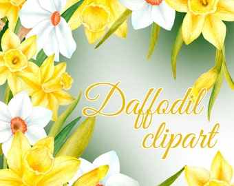 Watercolor daffodil clipart, Spring flowers illustration, Hand painted flowers clipart, Daffodil illustration, Floral clipart, yellow flower