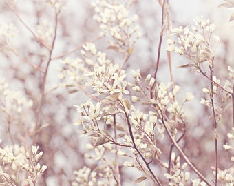 White Blossoms Color Photo Print { sunshine, sunlight, flower, buds, bloom, spring, tree, wall art, macro, nature & fine art photography }