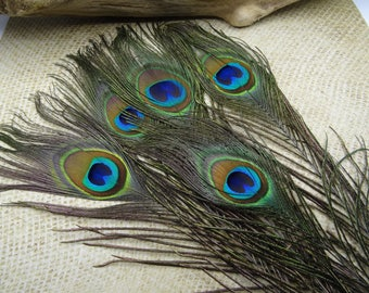 5 natural peacock feathers