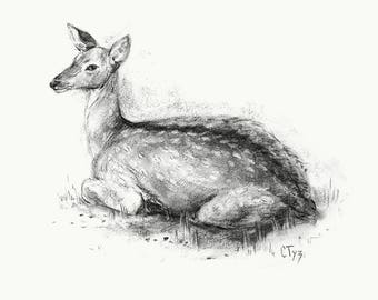 Original Charcoal Drawing Of Young Deer, Paper Size A3, Framed, With Passepartout