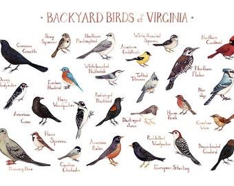 Virginia Backyard Birds Field Guide Art Print / Watercolor Painting / Wall  Art / Nature Print