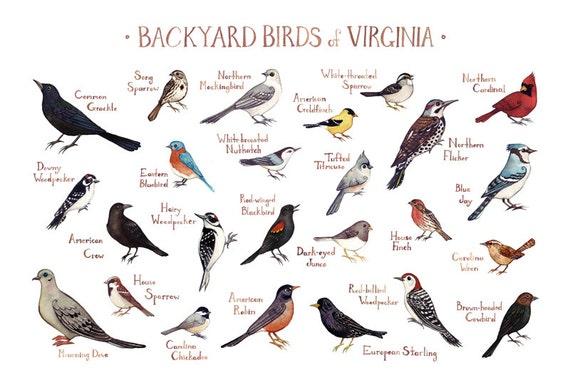 Virginia Backyard Birds Field Guide Art Print Watercolor