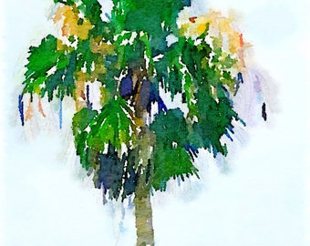 Palm Tree. Watercolor Painting, Florida, Summer.