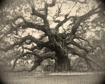 Tree of Life. Oak. Original Digital Art Photograph. Live Oak. Giclee Print. Black and White. Wall Decor. ANGEL OAK by Mikel Robinson