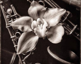 Orchid and Clarinet