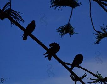 Three Birds in a Pod Photo Print