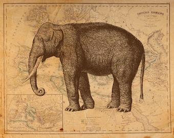 Jahrgang Elefant auf antiken römischen Reiches Karte Drucken 8 x 10 P71