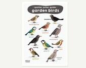 Garden birds A4 print - b...