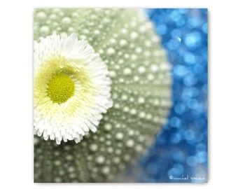 Tiny Green Urchin with Daisy Photograph Affordable Home Photography Prints Nature Photography Decor Sea Theme Water Sea Urchin