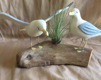 Two Seagulls On A Wooden Platform With An Air Plant