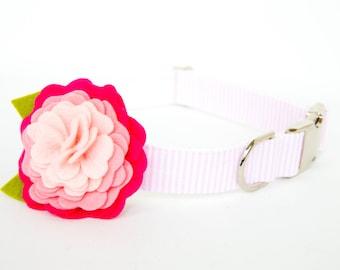 Flower Dog Collar - Pink Ombre Posey on Seersucker