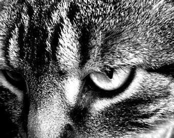 Feline Staredown