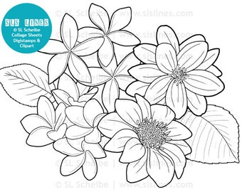 Digistamp flowers dahlias coloring page, digital stamp flower adult colouring Dahlia