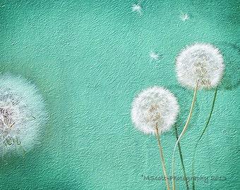 Dandelion Photograph   Botanical Print   Turquoise Wall Art   Modern Floral     Modern Art   New Home Gift