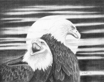 Eagles  - 11 x 14 Matted Print