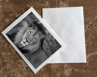 African Lion Blank Notecard