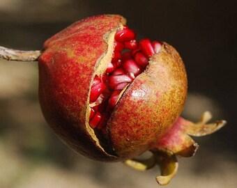 Pomegranate Fragrance Oil - 1 pound