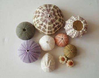 10 pcs multi color sea urchins. Summer collection, a real sea treasure.