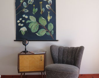 Vintage roll down educational wall chart of SALIX PUSSY WILLOW by Jung Koch Quentell. Botanical school chart 1961