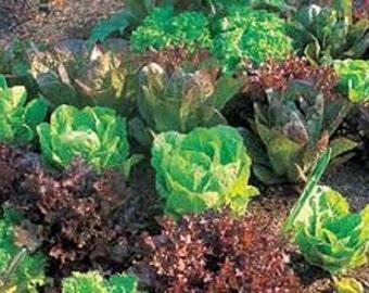 Organic Heirloom Lettuce Survival Wholesale Garden Kit 12pks over 1125+ seeds All the varieties you need in a garden