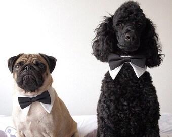 Top Seller! Designer Dog Tuxedo Shirt Collar, Bow Tie for Dog Wedding accessory- Dog Tuxedo Collar, Wedding Dog accessory with NO LEASH HOOK