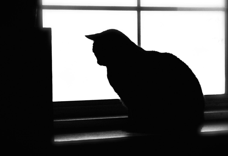 Le Chat Noir blanco y negro fotografía gato de la Halloween