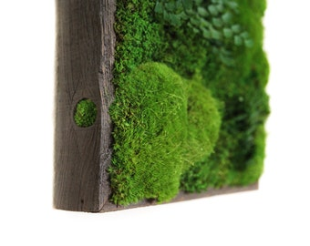 "12""x12"" Artisan Moss® Plant Painting® Moss and Ferns in Reclaimed Wood Frame. No Maintenance Green Wall Art. Real Preserved Plants."