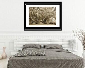 Charleston Photography-Sepia Photography-Tree Photography-Park Photography-Fine Art Print-16x20-Horizontal Print-South Carolina Photography