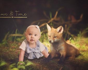 Digital backdrop / Digital background / Fox Cub / Animal Instant Download