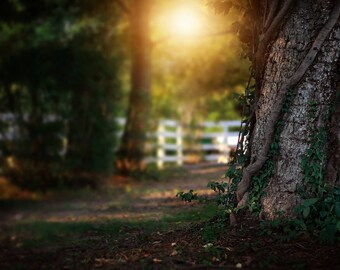 Whimsical Tree Digital Backdrop