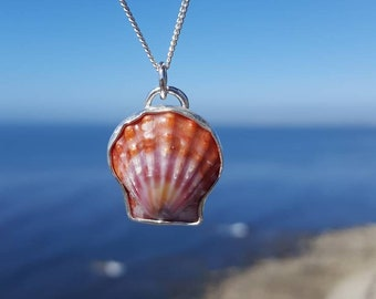 Ultra rare Hawaiian sunrise shell necklace