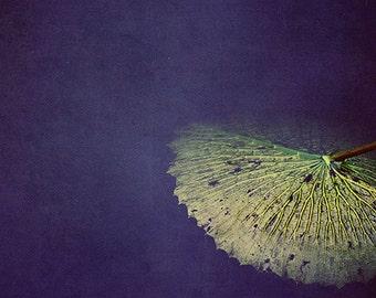 Modern Wall Art, Fine Art Nature Photograph, St Louis Botanical Garden, Lily Pad Plant Print, Bedroom Decor, Housewarming Gift, 8x10 Print