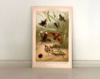c. 1903 ANTIQUE INSECT LITHOGRAPH - original antique entomology bug insects bees flies print praying mantis grasshopper